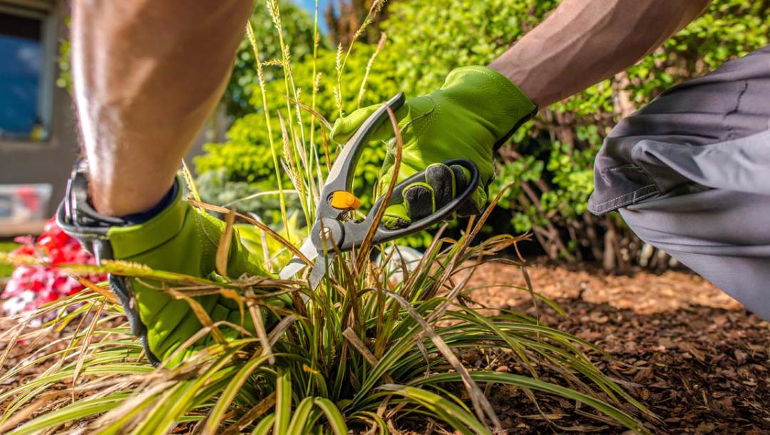 jardinage à domicile bricolage à domicile aide aux séniors ménage à domicile repassage à domicile service d'aide à domicile ménage à domicile